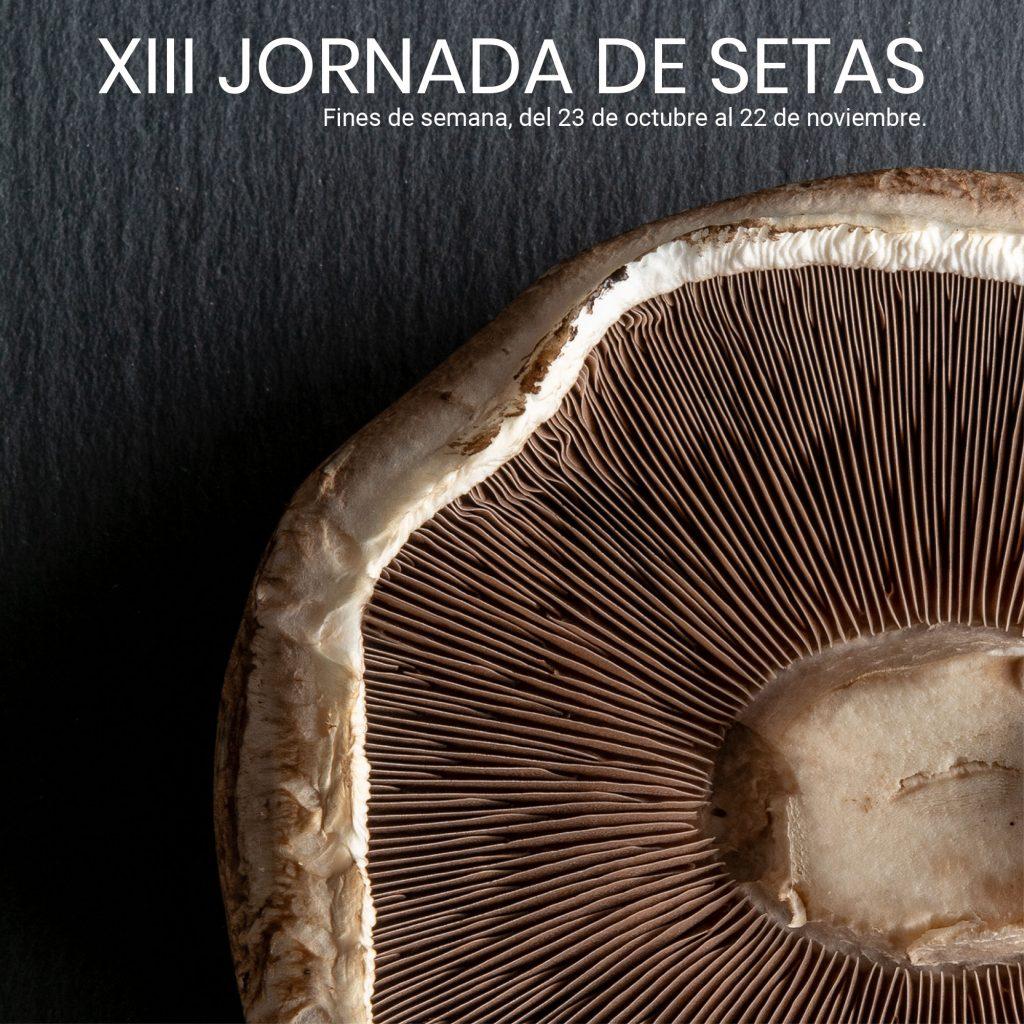 XIII JORNADA DE SETAS